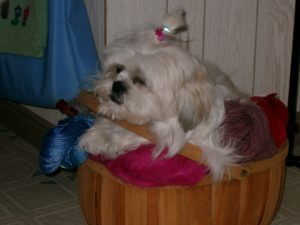 Zoey sitting in an apple basket, with her chin resting on the handle, and her paws below it, with yarn peeping out from under her