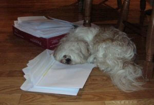Envelopes on a hardwood floor with the flaps open, and Zoey's chin resting on the stack