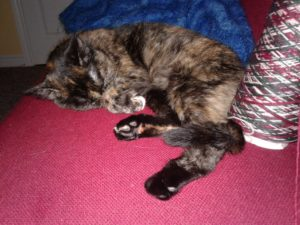 A tortoiseshell cat curled up with her back paws stretched out into the foreground. She's laying on a red sofa with a cone of green, red and white variegated yarn by her back paws. In the background is a multi-tone blue afghan in a rippling knitting pattern.